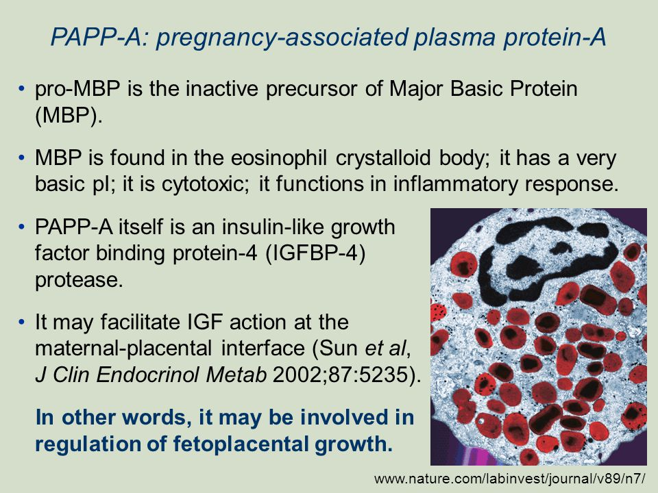 PAPP-A: pregnancy-associated plasma protein-A