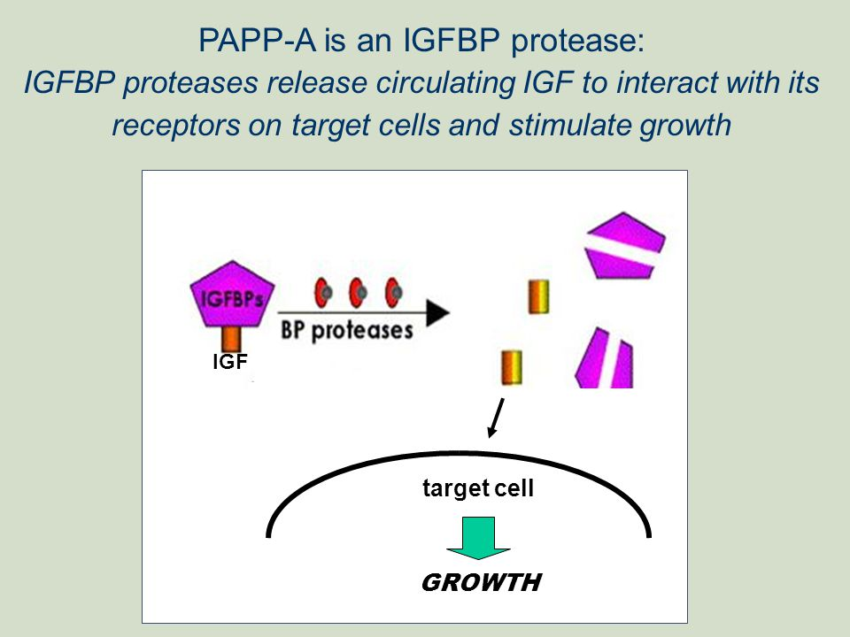 PAPP-A is an IGFBP protease: