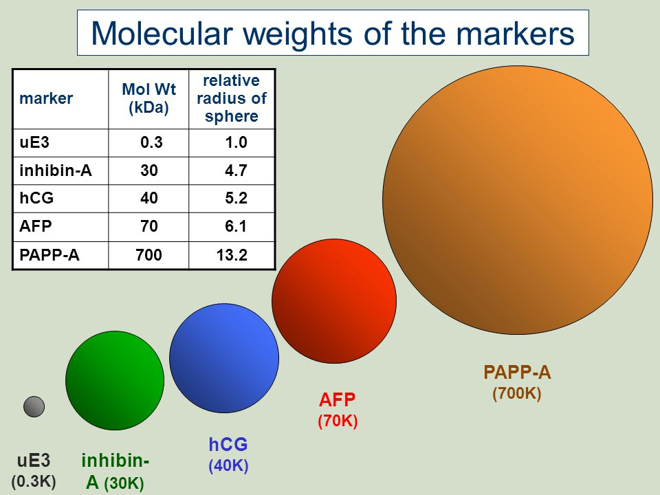 Molecular weights of the markers