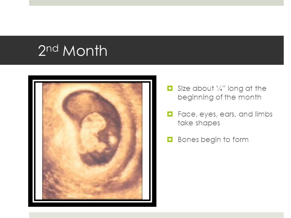 2nd Month Size about ¼ long at the beginning of the month