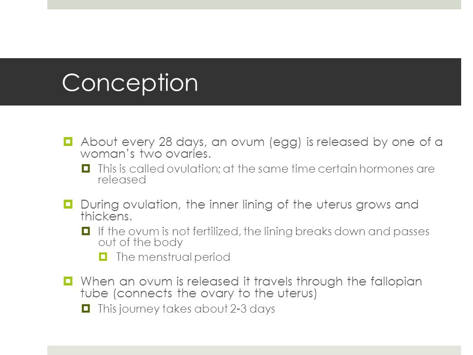 Conception About every 28 days, an ovum (egg) is released by one of a woman's two ovaries.