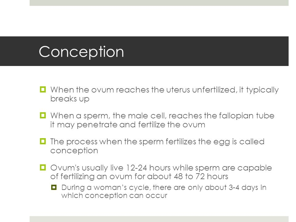 Conception When the ovum reaches the uterus unfertilized, it typically breaks up.