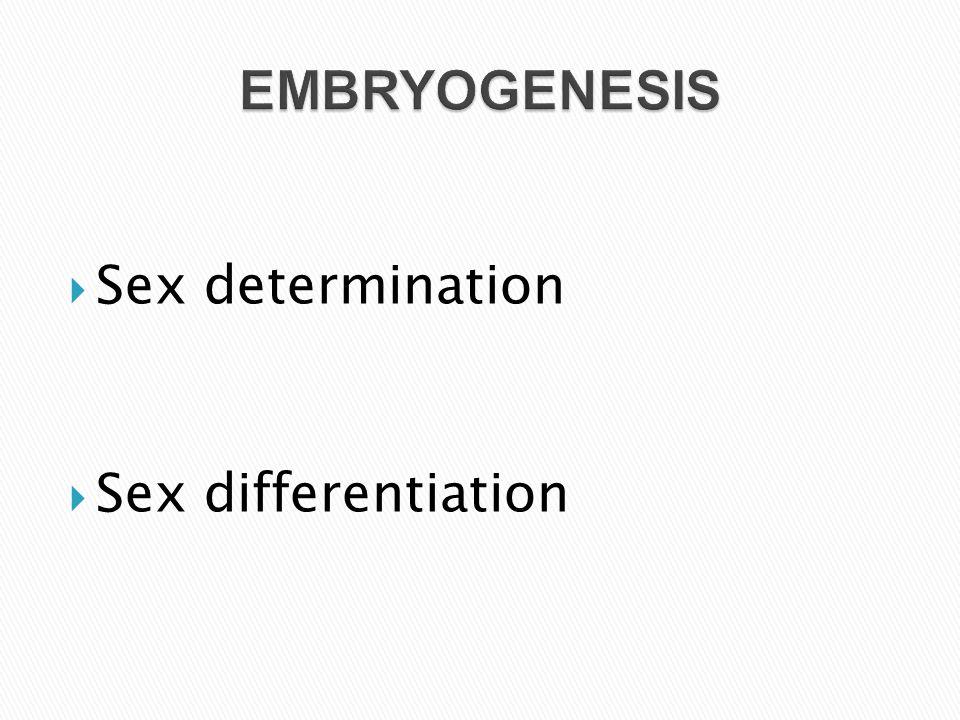 EMBRYOGENESIS Sex determination Sex differentiation