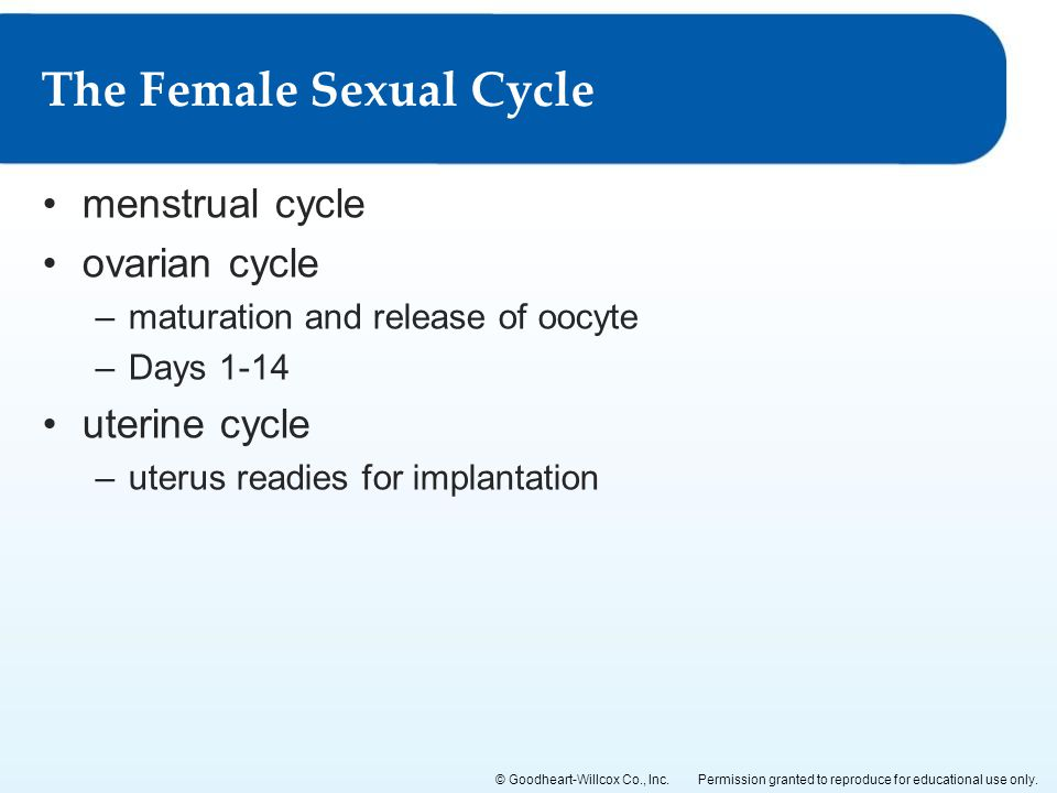 The Female Sexual Cycle