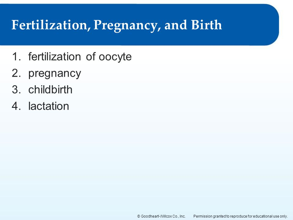 Fertilization, Pregnancy, and Birth