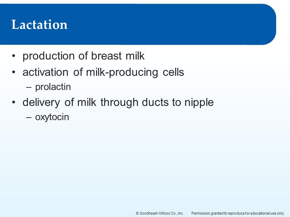 Lactation production of breast milk activation of milk-producing cells