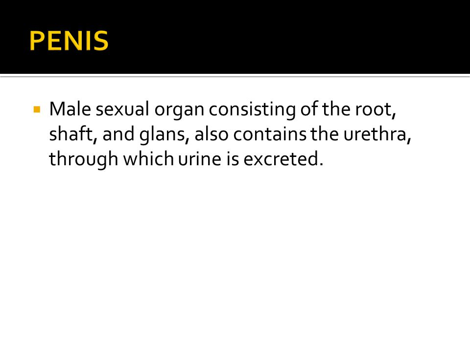 PENIS Male sexual organ consisting of the root, shaft, and glans, also contains the urethra, through which urine is excreted.