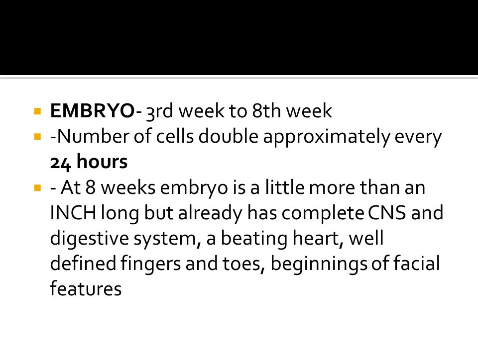 EMBRYO- 3rd week to 8th week