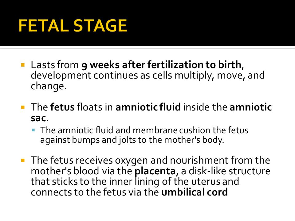 FETAL STAGE Lasts from 9 weeks after fertilization to birth, development continues as cells multiply, move, and change.