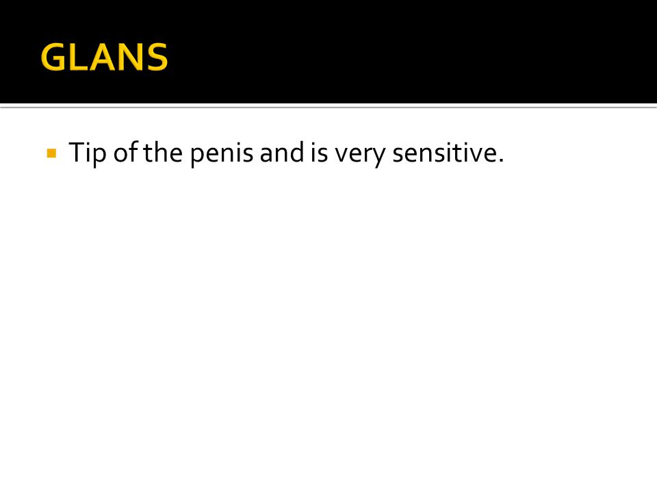 GLANS Tip of the penis and is very sensitive.