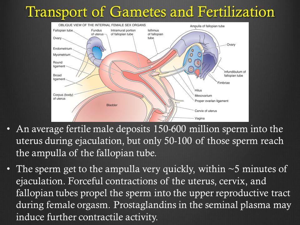 Transport of Gametes and Fertilization