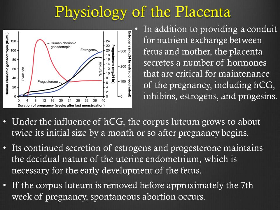 Physiology of the Placenta