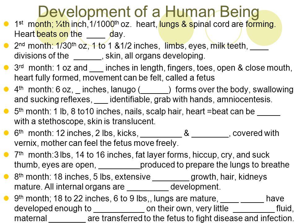 Development of a Human Being