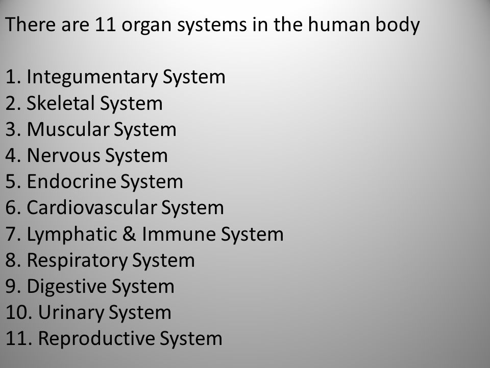 There are 11 organ systems in the human body