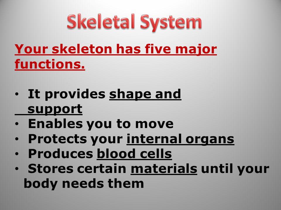 Skeletal System Your skeleton has five major functions.