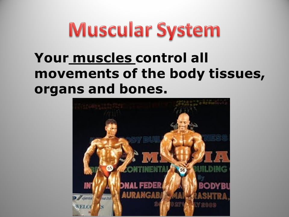 Muscular System Your muscles control all movements of the body tissues, organs and bones.