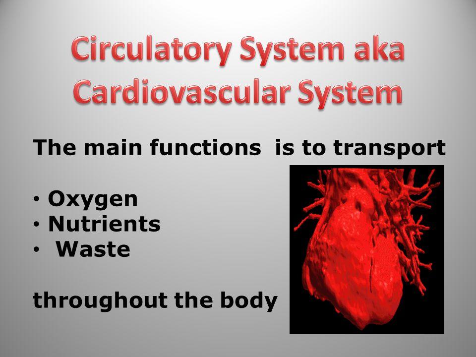 Circulatory System aka Cardiovascular System