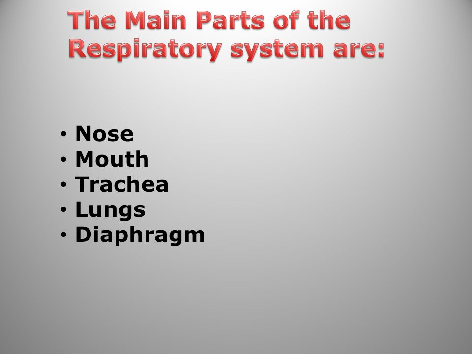 Respiratory system are:
