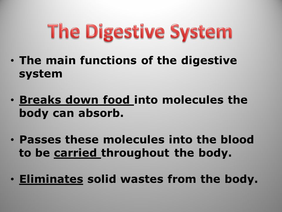 The Digestive System The main functions of the digestive system