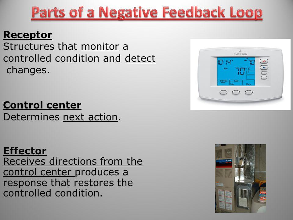 Parts of a Negative Feedback Loop