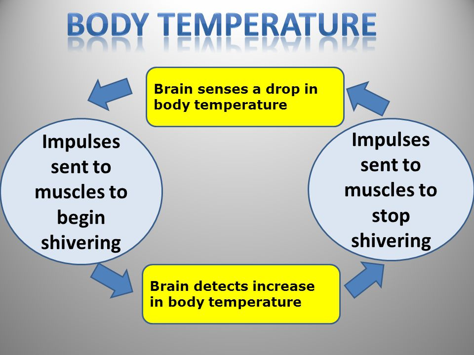 Body Temperature Impulses Impulses sent to muscles to stop shivering