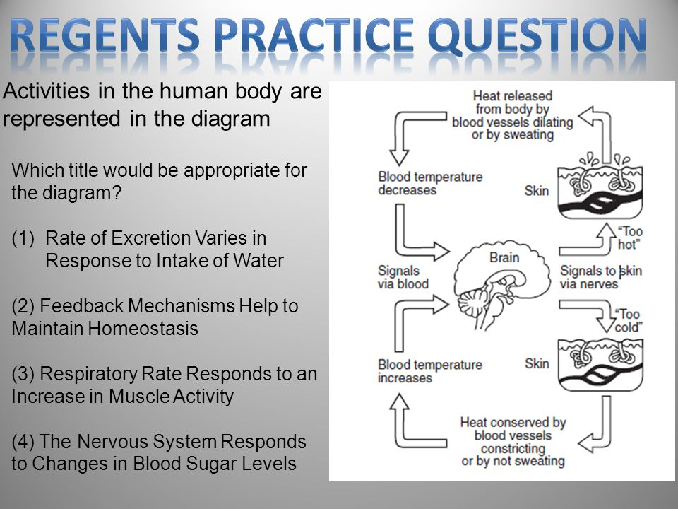 Regents Practice Question