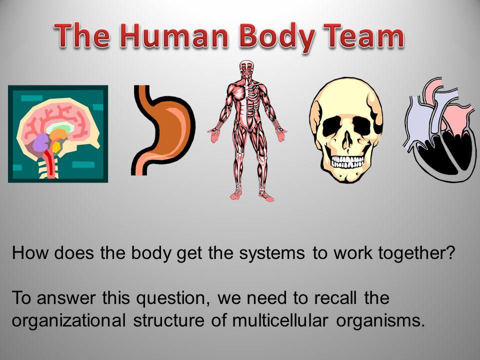 The Human Body Team How does the body get the systems to work together