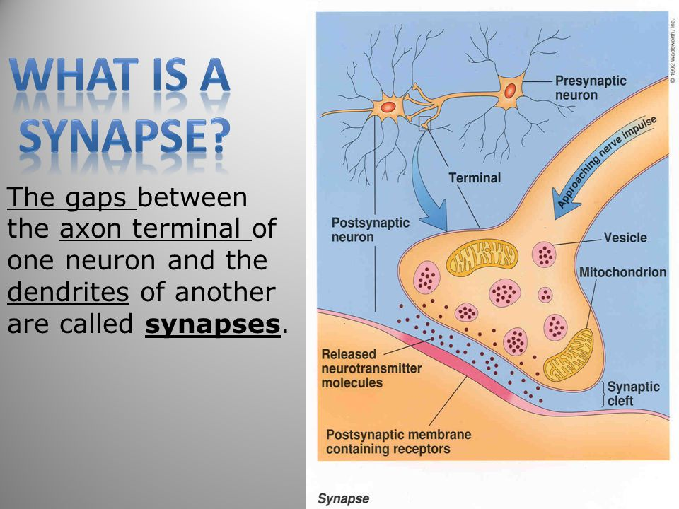 What is a Synapse.