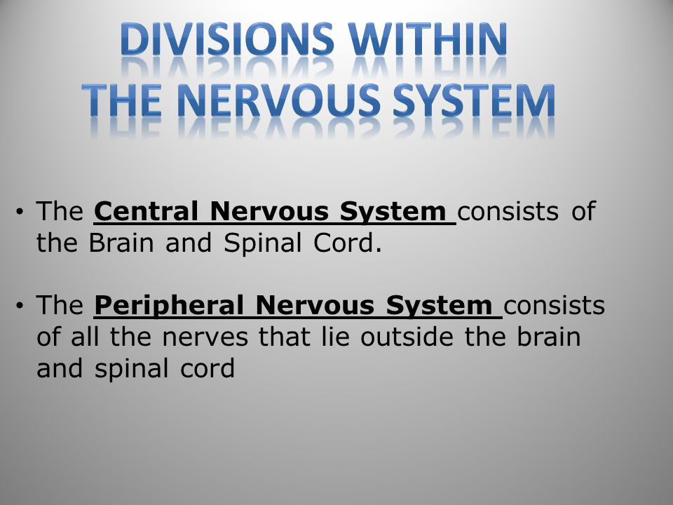 Divisions within the nervous system