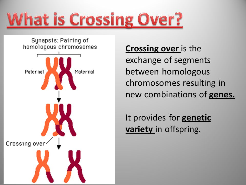 What is Crossing Over Crossing over is the exchange of segments between homologous chromosomes resulting in new combinations of genes.
