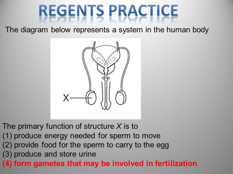 The diagram below represents a system in the human body