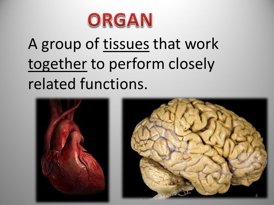 ORGAN A group of tissues that work together to perform closely related functions.