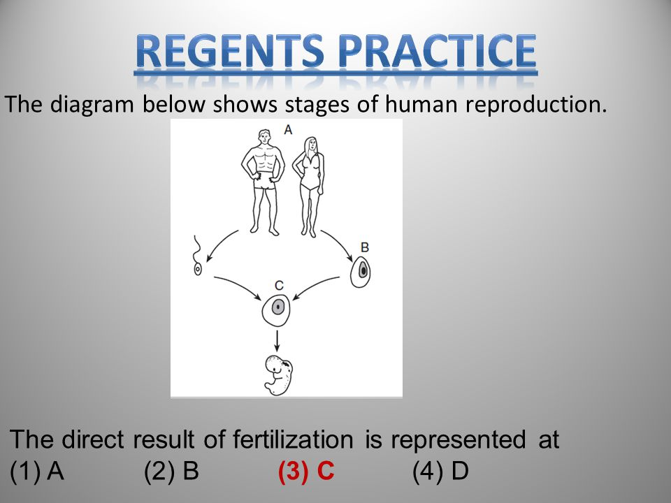 Regents PRactice The diagram below shows stages of human reproduction.