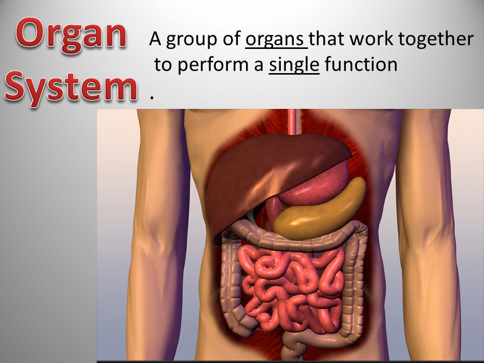 Organ System . A group of organs that work together