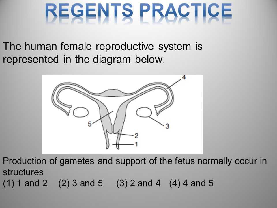 The human female reproductive system is represented in the diagram below.