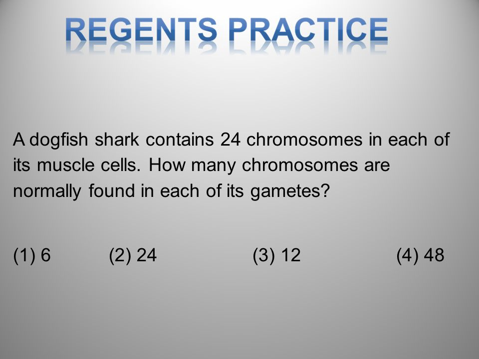 A dogfish shark contains 24 chromosomes in each of its muscle cells