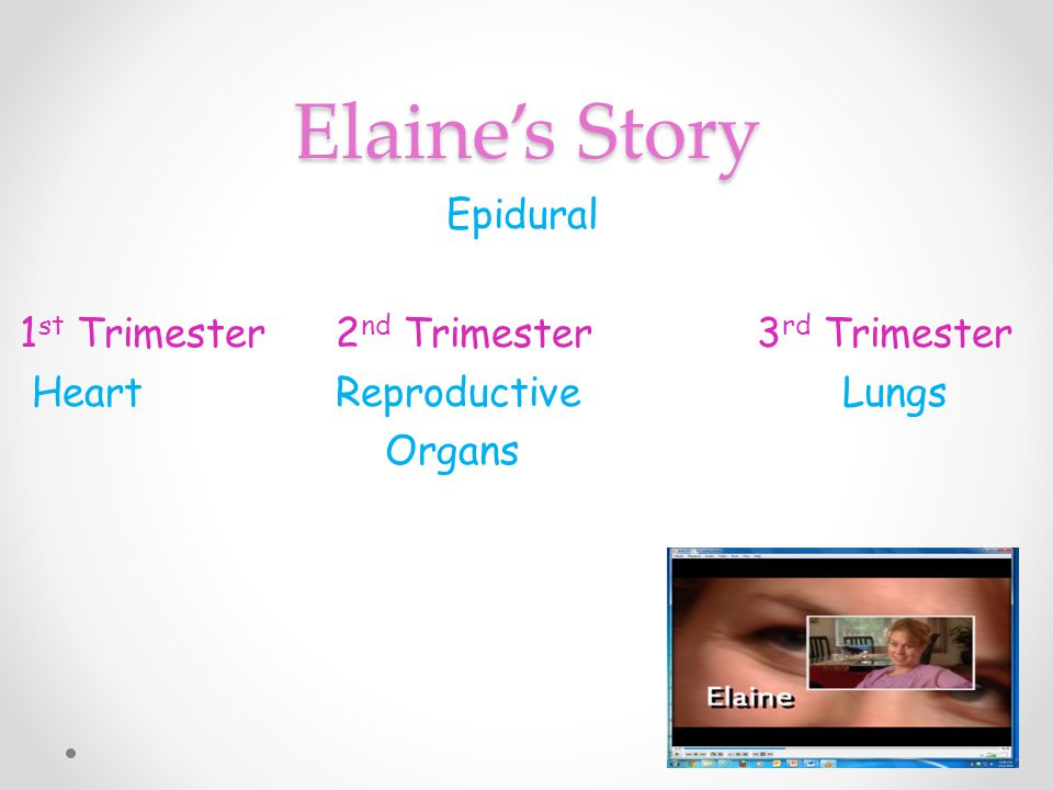 Elaine's Story Epidural 1st Trimester 2nd Trimester 3rd Trimester Heart Reproductive Lungs Organs