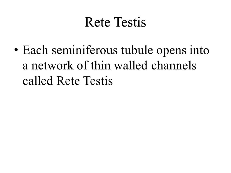 Rete Testis Each seminiferous tubule opens into a network of thin walled channels called Rete Testis.