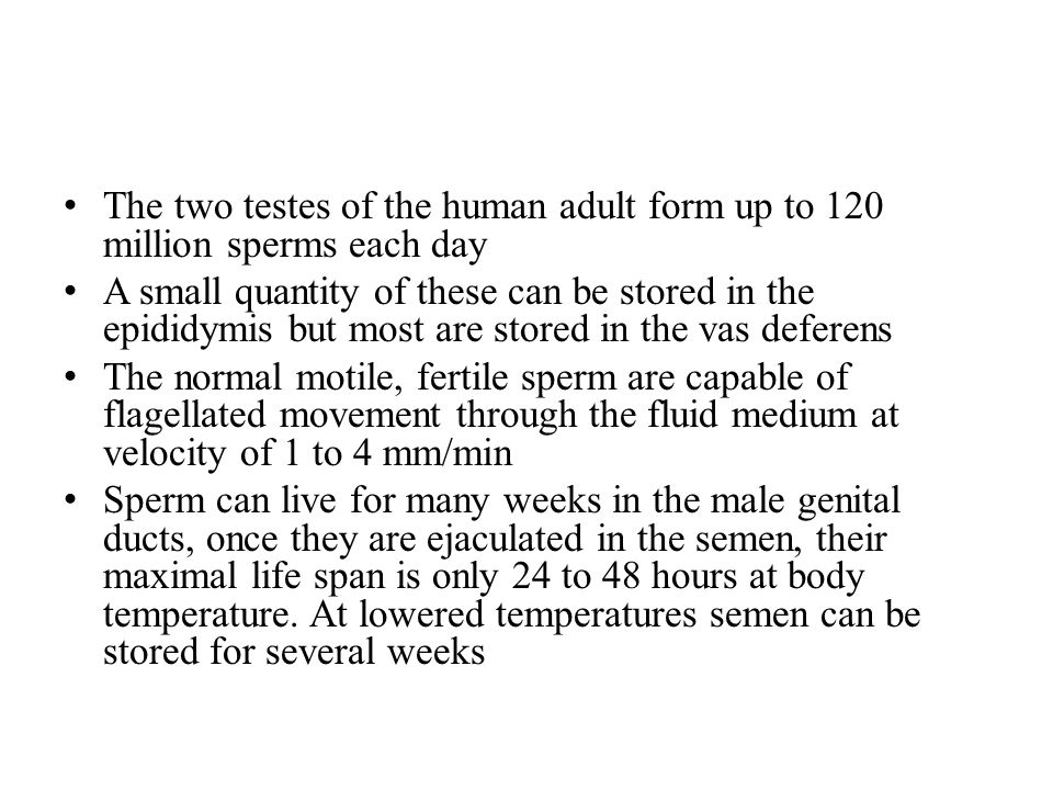 The two testes of the human adult form up to 120 million sperms each day