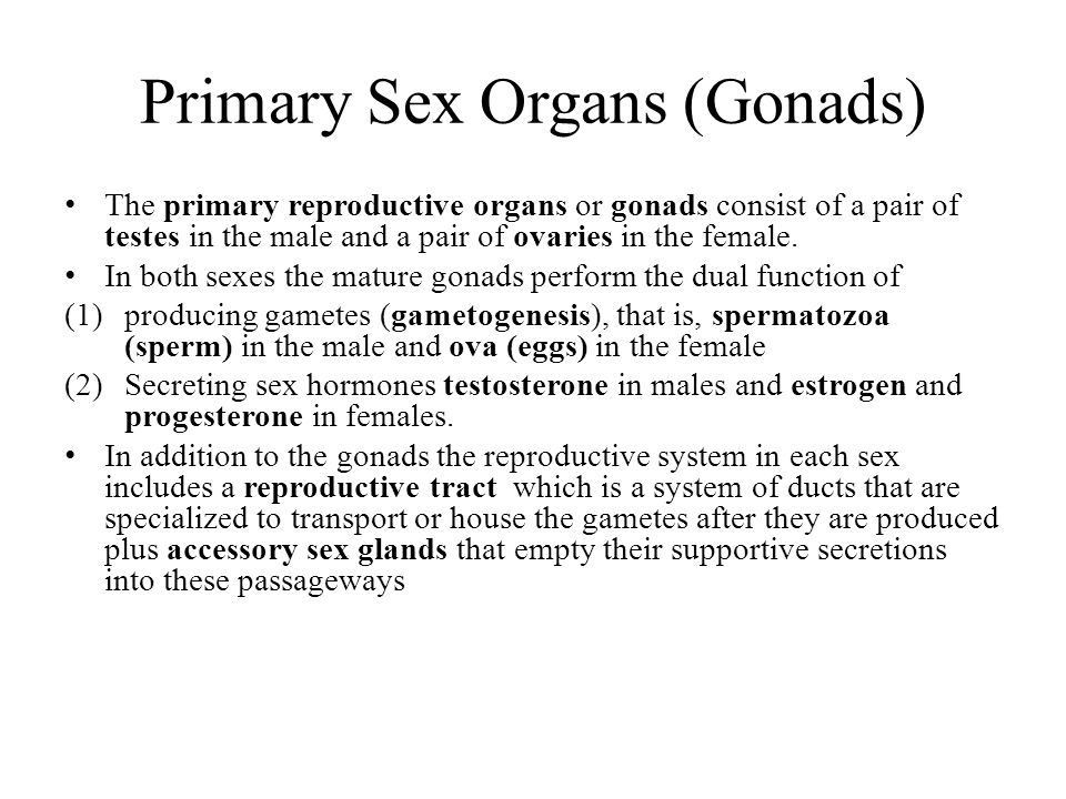 Primary Sex Organs (Gonads)