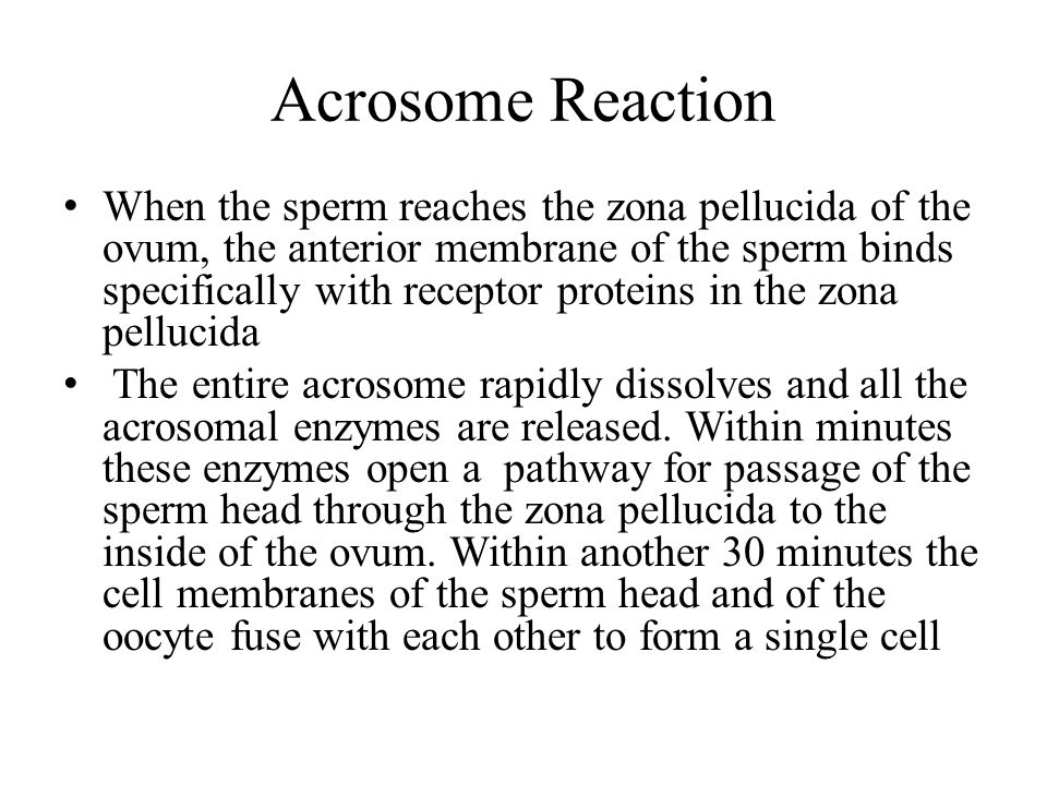 Acrosome Reaction