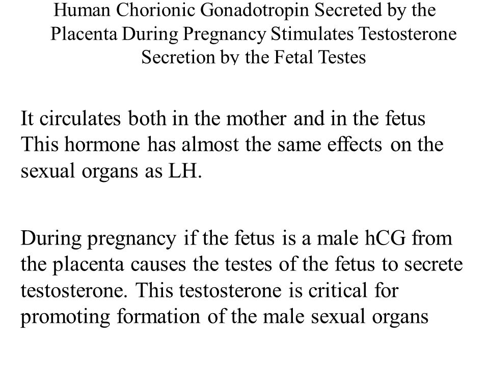 Human Chorionic Gonadotropin Secreted by the Placenta During Pregnancy Stimulates Testosterone Secretion by the Fetal Testes
