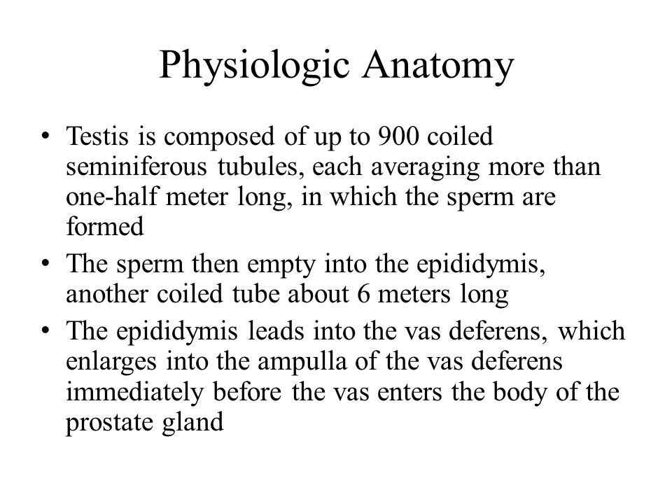 Physiologic Anatomy