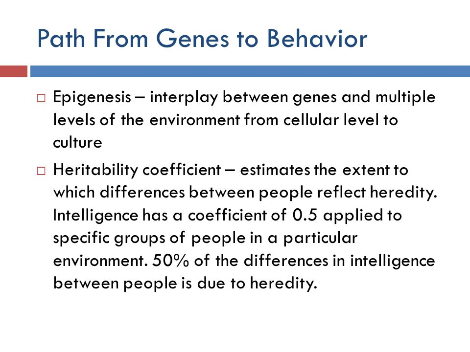 Path From Genes to Behavior