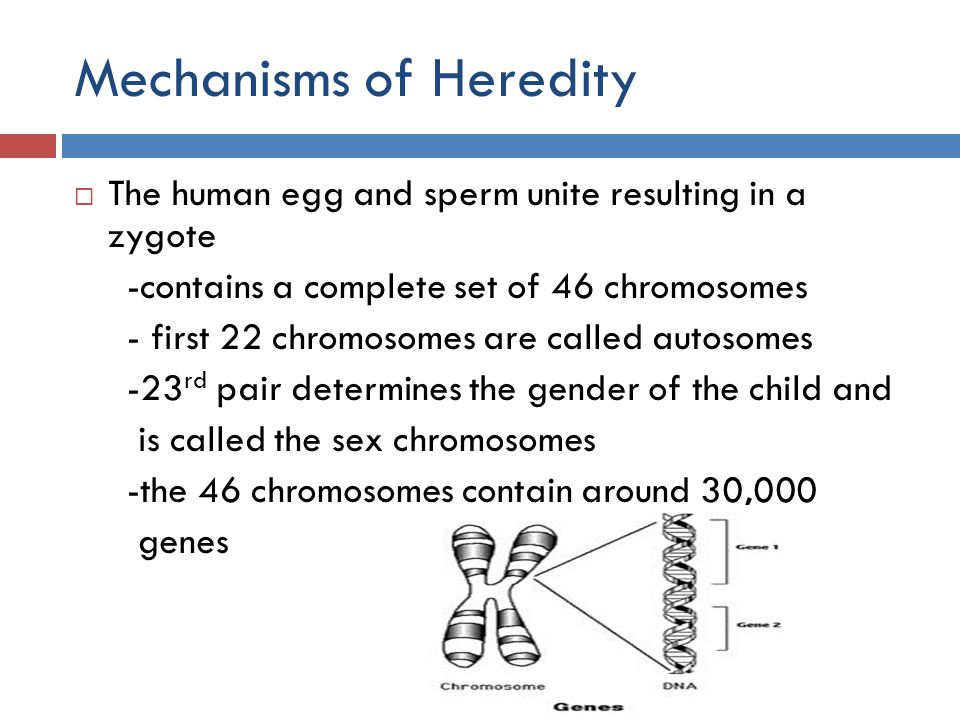Mechanisms of Heredity