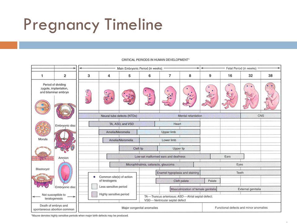 Pregnancy Timeline