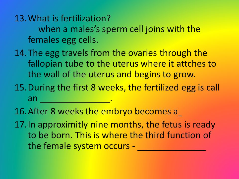 What is fertilization when a males's sperm cell joins with the females egg cells.