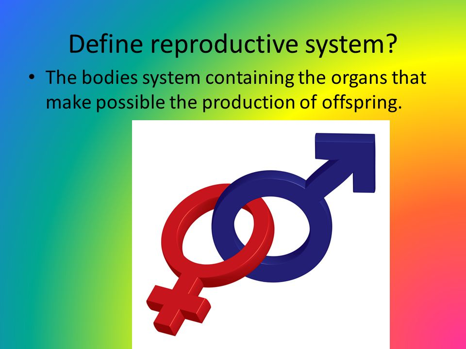 Define reproductive system