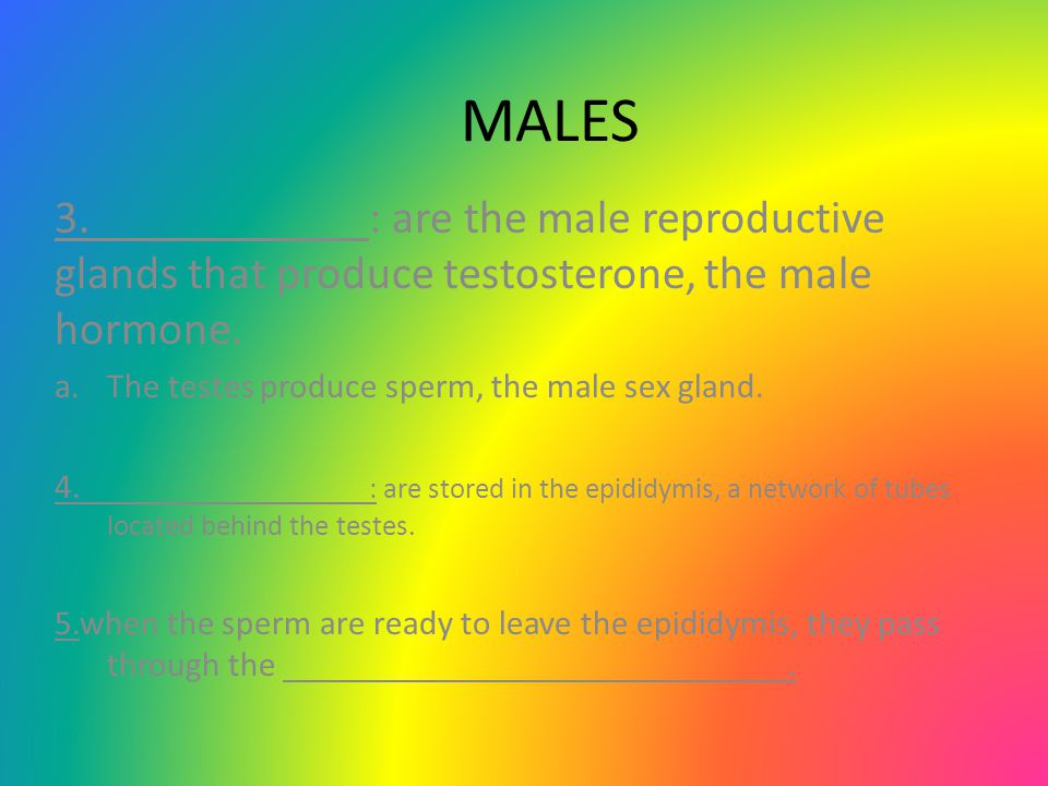 MALES 3. : are the male reproductive glands that produce testosterone, the male hormone. The testes produce sperm, the male sex gland.