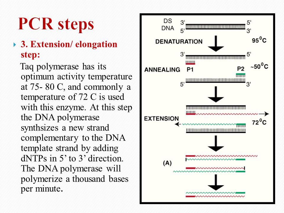 PCR steps 3. Extension/ elongation step:
